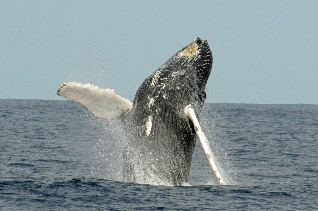 whales_356_edited